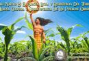El maíz nativo es el origen, lucha y resistencia del territorio, el agua, lengua, cultura y sobrevivencia de los pueblos originarios
